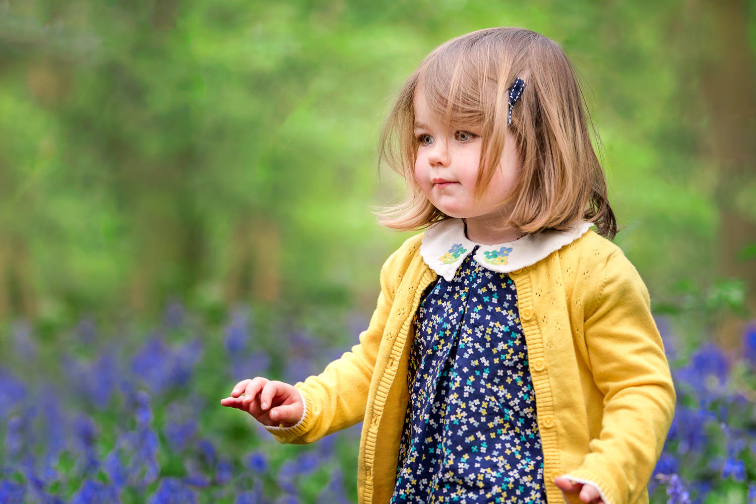 toddler girl walking in bluebells with yellow cardigan during family bluebell shoot