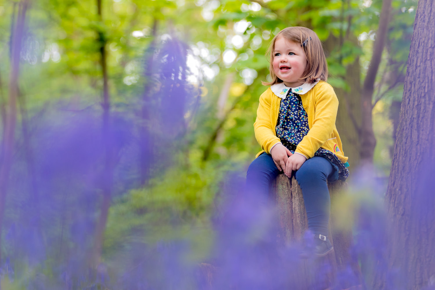 Toddler sat on tree stump in bluebells during family bluebell shoot
