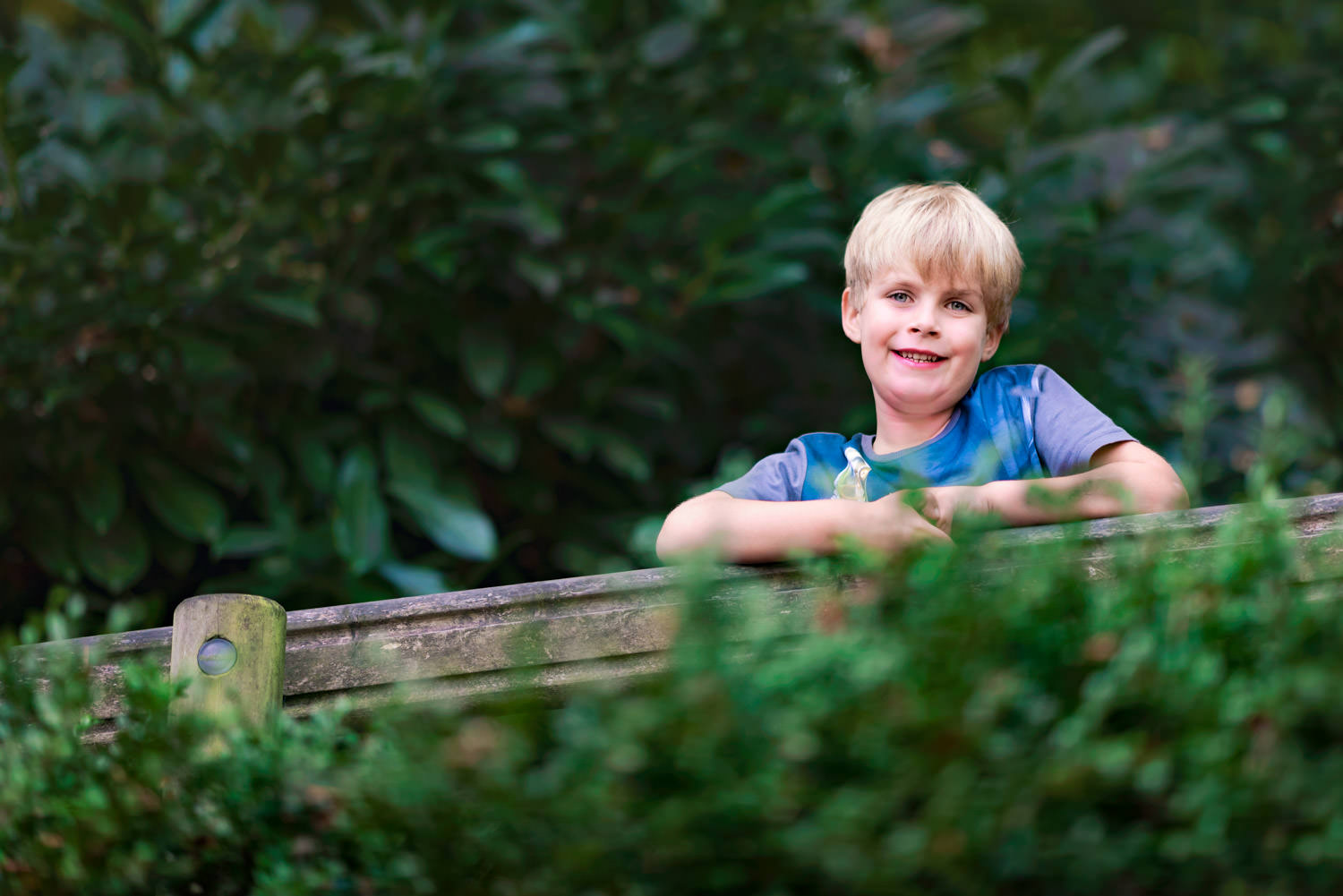 Boy peering over fence and hedge at camera