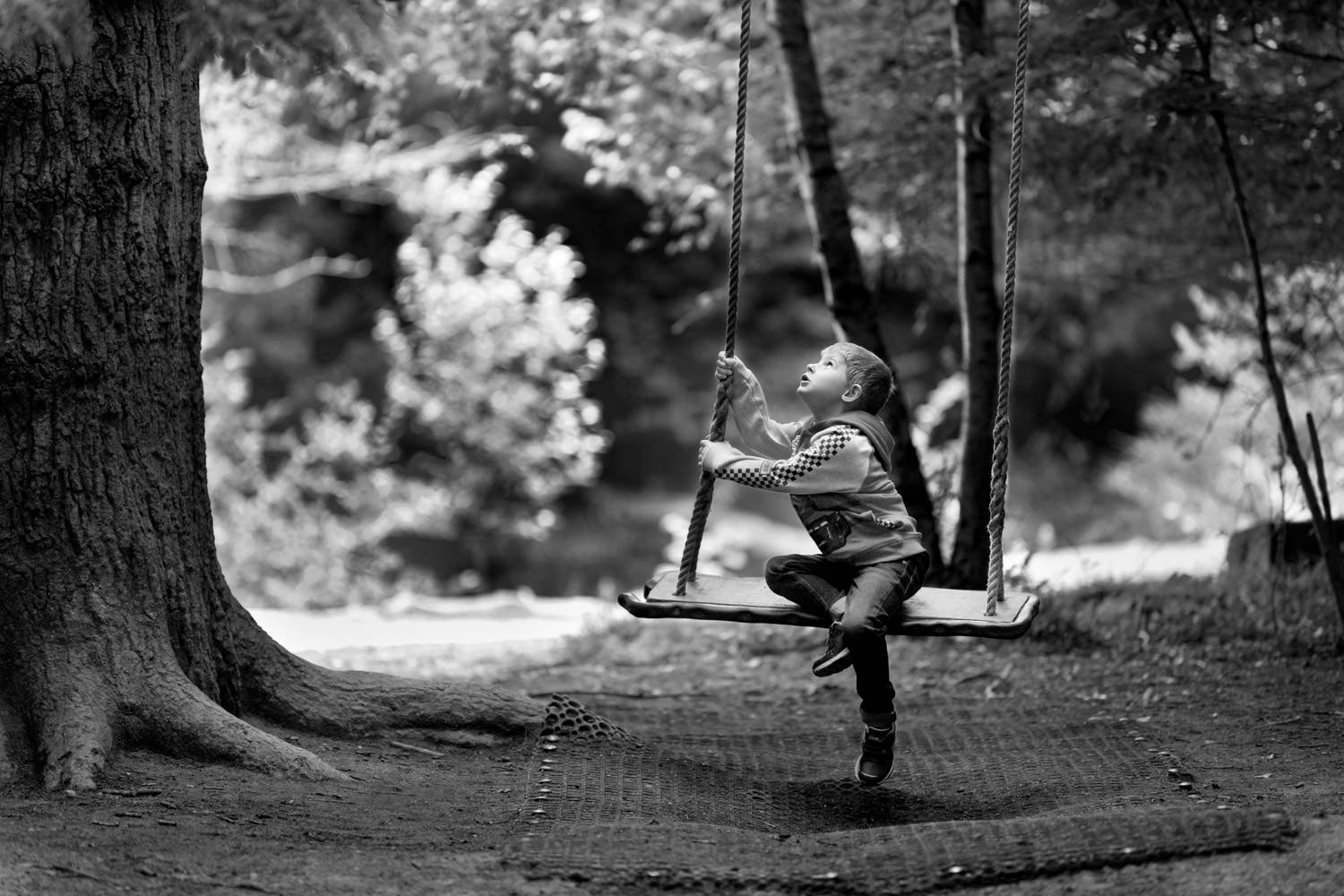 boy sat on very large tree swing looking into sky