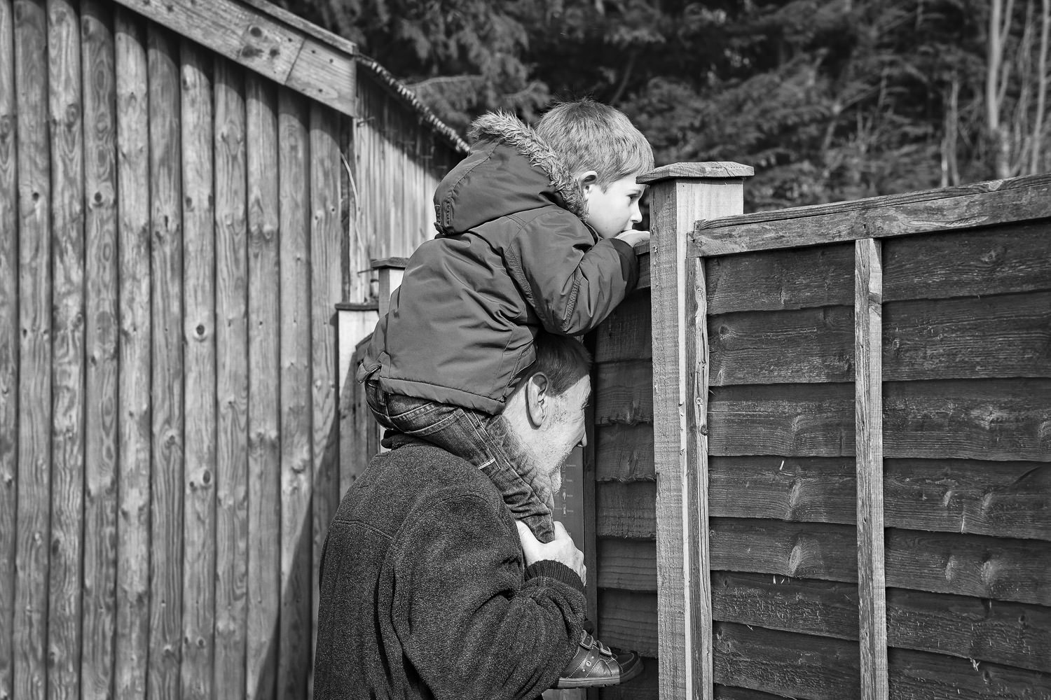 Boy on grandfather's shoulders looking over fence