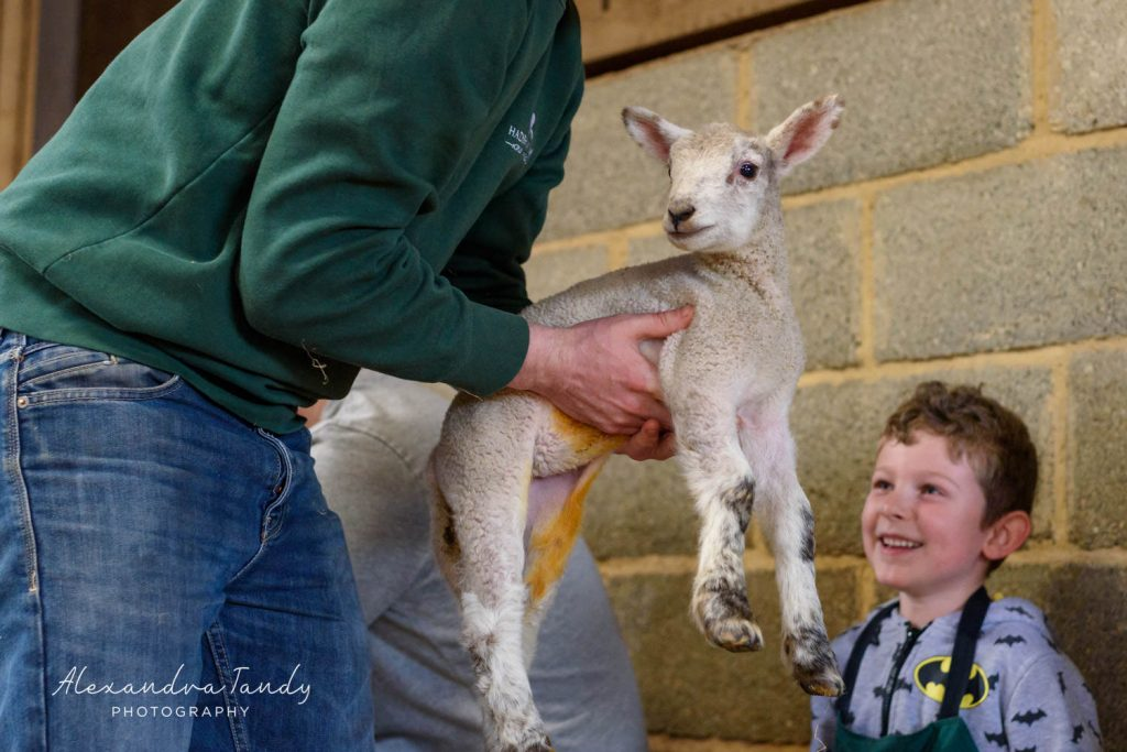 Event photographer family lambing day