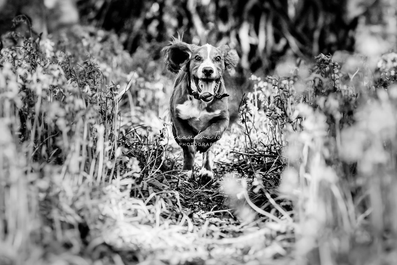 Fun Photos of Dogs