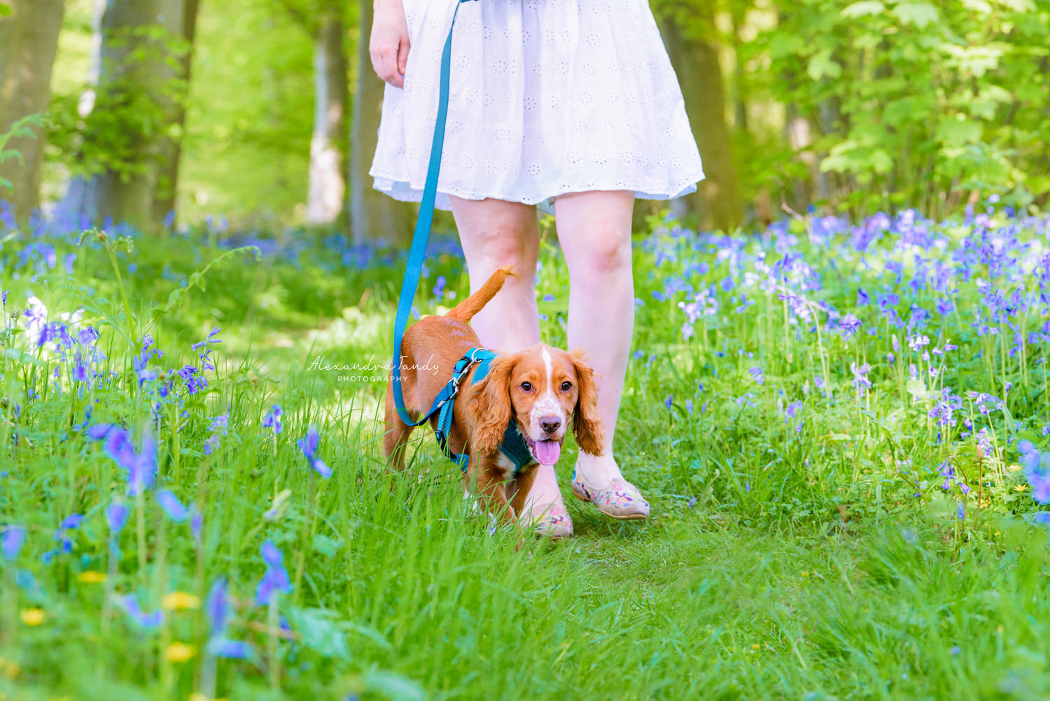 Bluebells Dog Photography