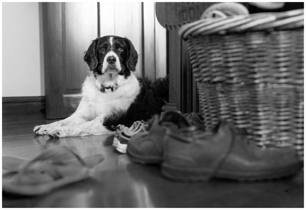 Collie dog sitting in a hallway guarding a basket of shes