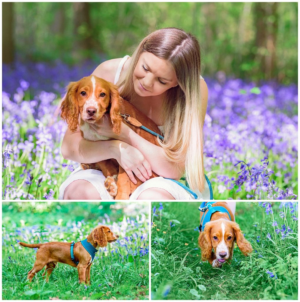 Montage of images of a puppy in the bluebells