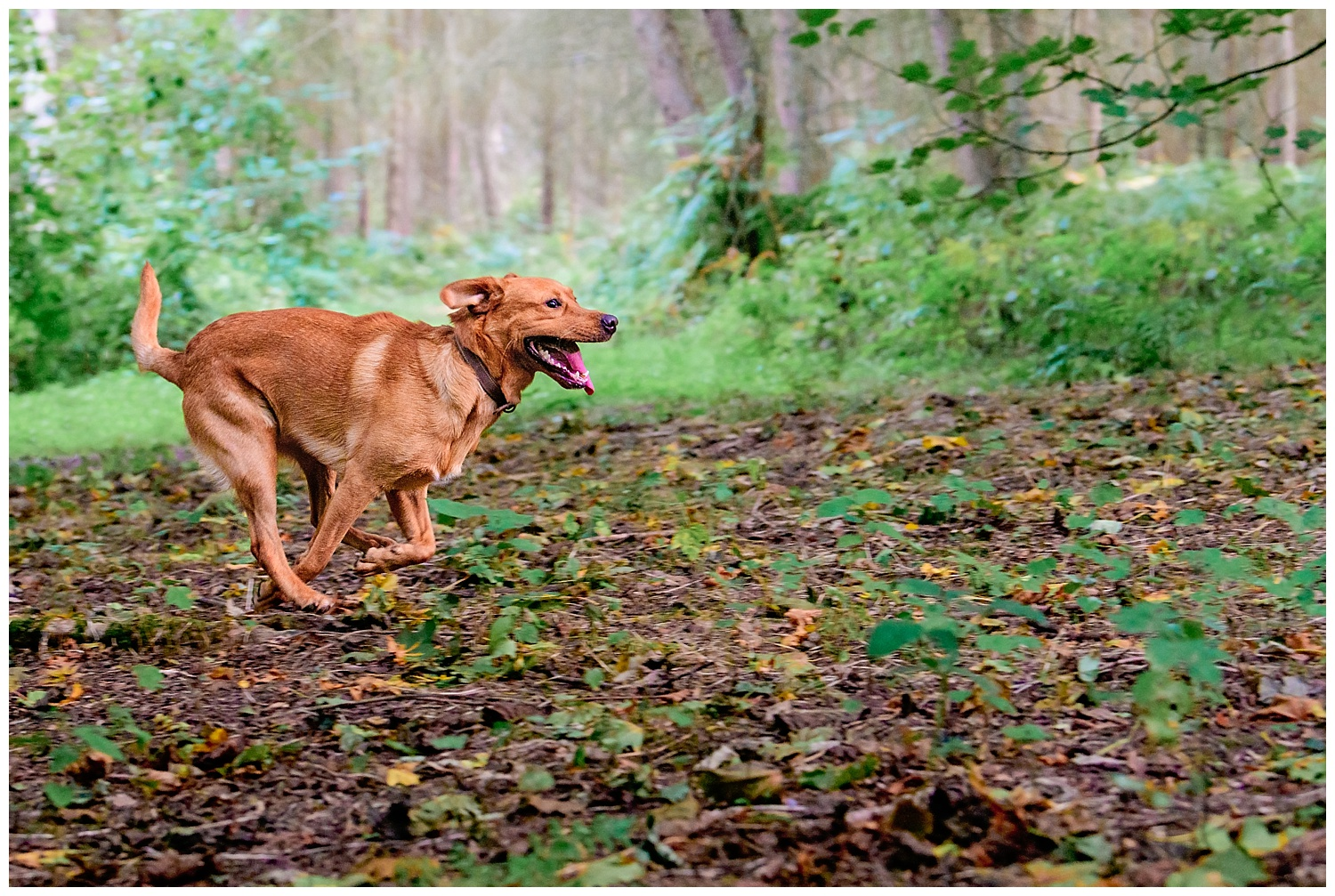 Dog running during a dog photo shoot