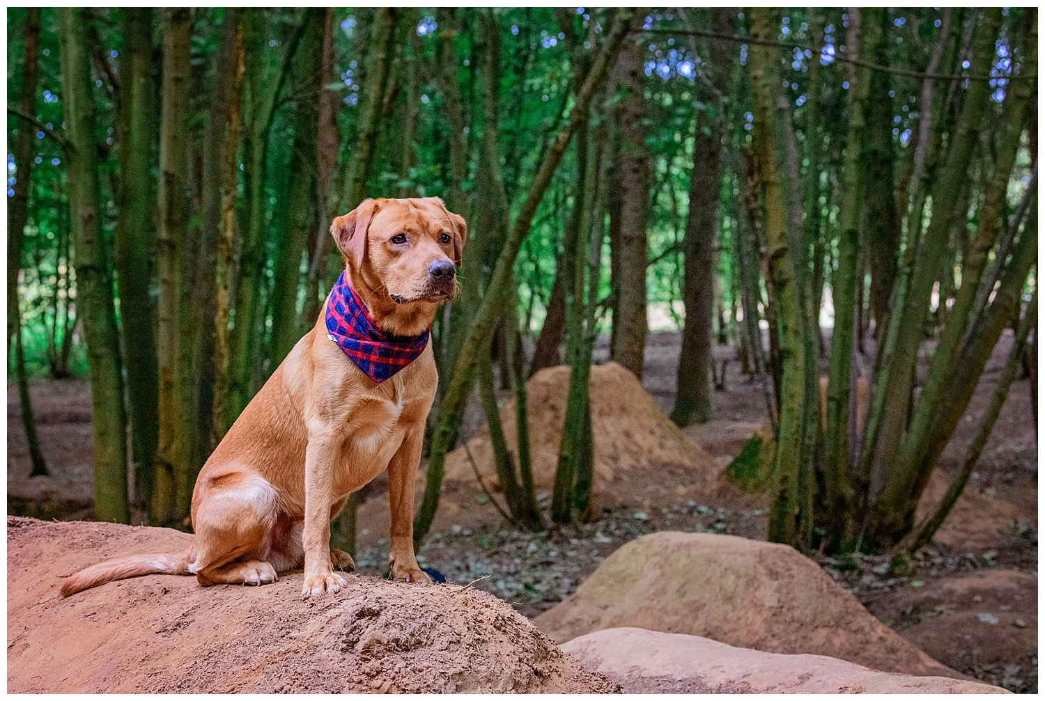 Dog sat on a mound of mud used by BMX bike riders for his dog photo shoot