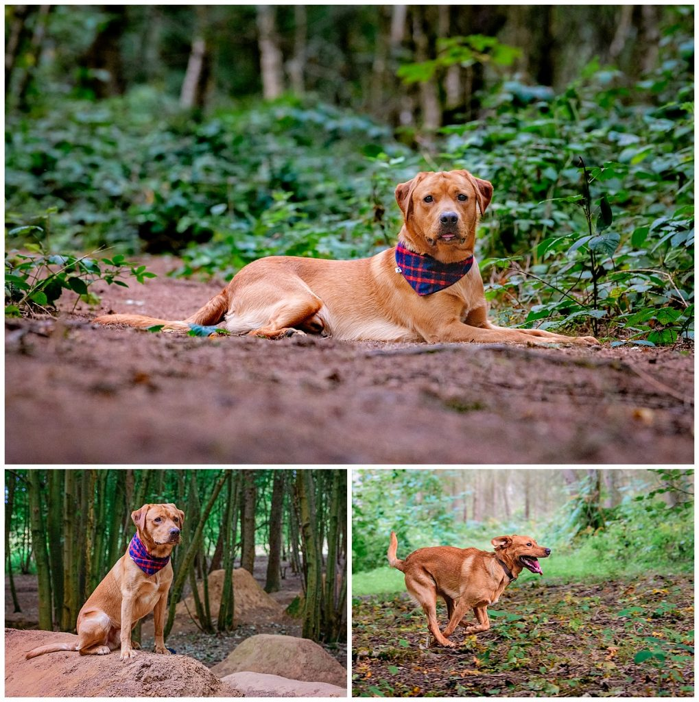 Montage of images by dog photographer Alexandra Tandy Photography
