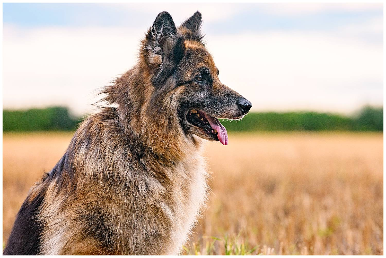 Importance of photographing older dogs. Deaf dogs wont react to squeaker toys, so in this profile photo of the dog the owner was stood off camera to the right waving at the dog!