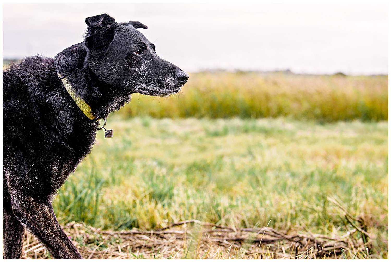 Profile image of a veteran dog