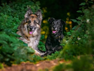 IMPORTANCE OF PHOTOGRAPHING OLDER DOGS!